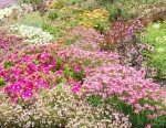 South Coast Botanical Gardens PV - Mike Hope