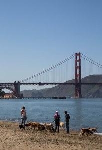 Golden Gate Bridge Dog Lovers