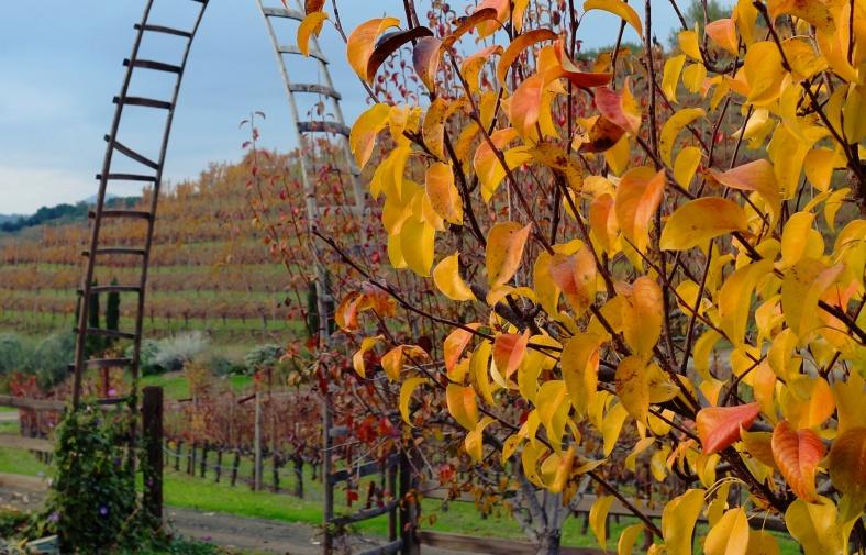 Vine Leaves by Mike-Hope