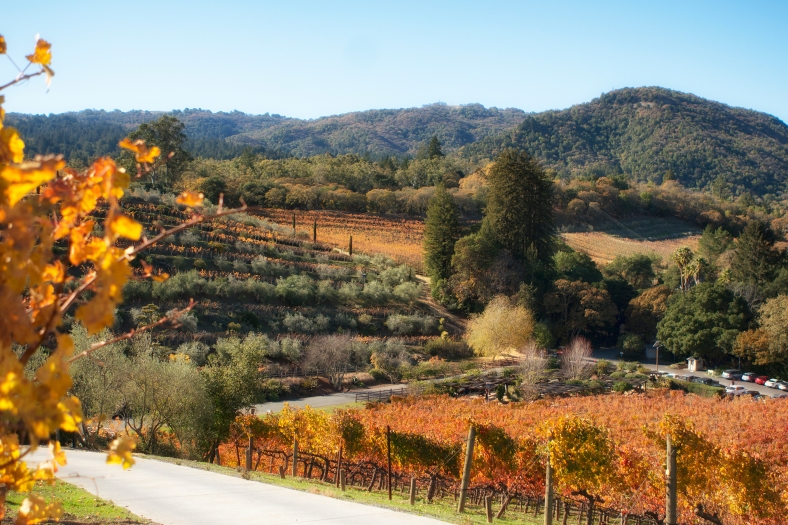 Benziger-winery-web-by-Mike-Hope