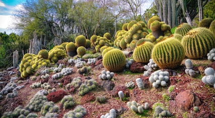 Cactii on the Hill By Mike Hope